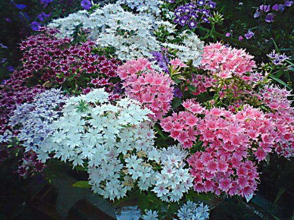 Разнообразие расцветок