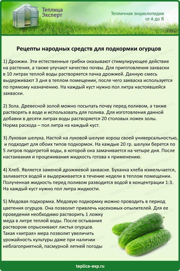 Рецепты народных средств для подкормки огурцов