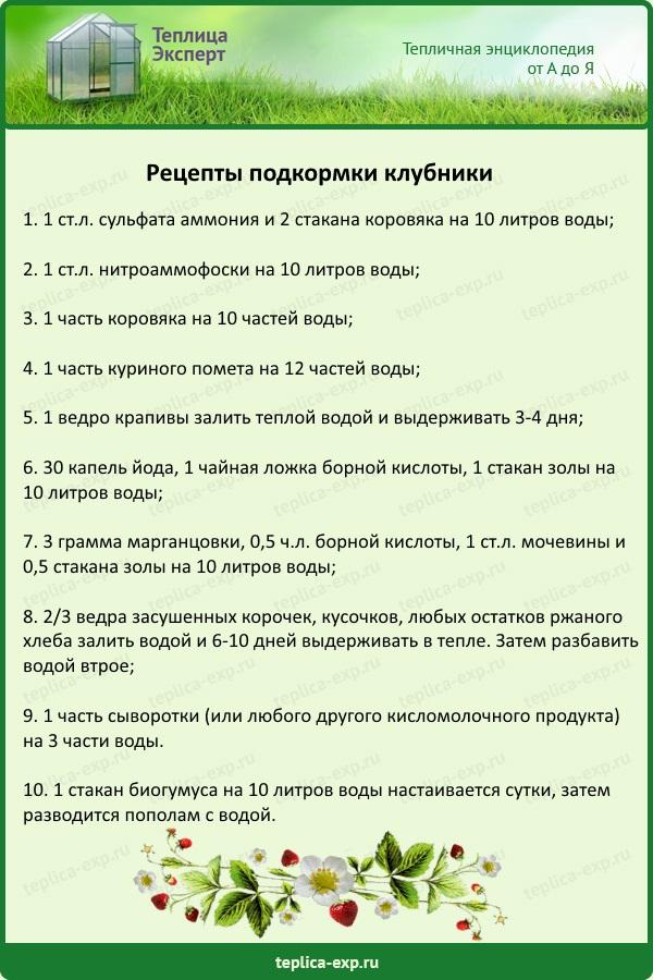 Рецепты подкормки клубники