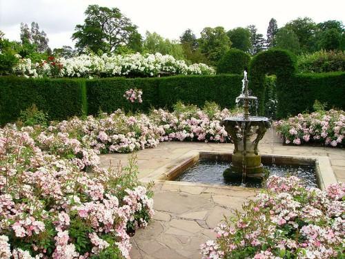 С полиантовой розой можно создавать очаровательные композиции