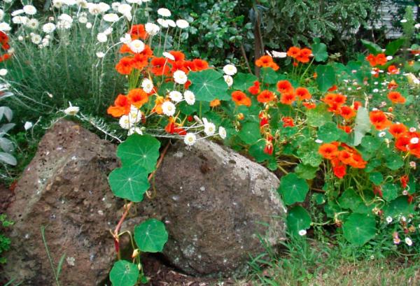 Постоянно влажный грунт, находящийся в низине, избыточно содержащий влагу, может привести к загниванию растений