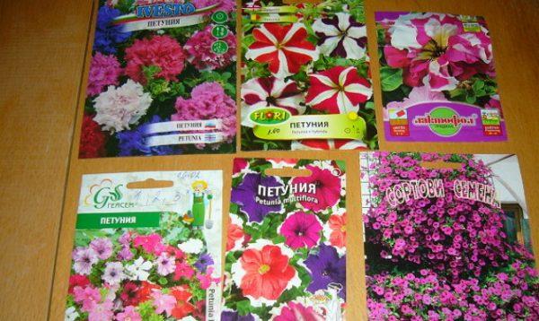 Семена петуний разнообразных сортов