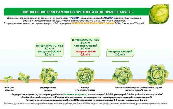 Схема подкормки савойской капусты в зависимости от возраста