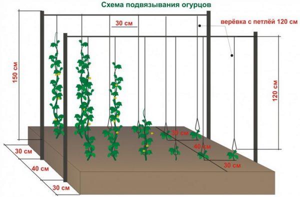 Схема подвязывания огурцов