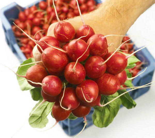 Сочные плоды редиски