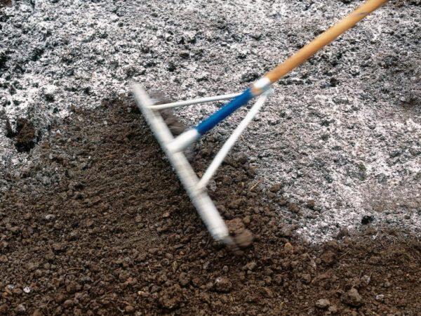 Спаржа не сможет хорошо прижиться на сильнокислых необработанных почвах