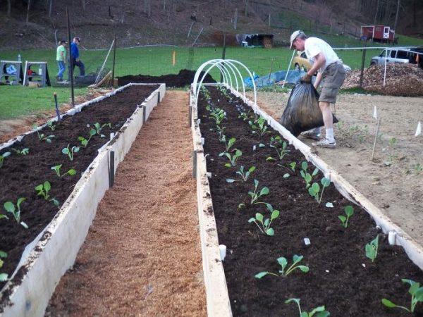 Теплые грядки хорошо защищают растения от холода