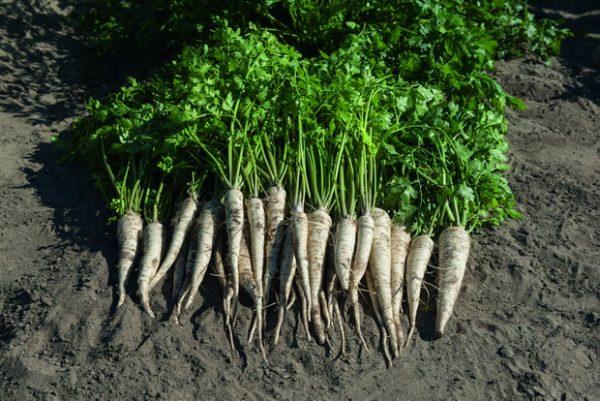 Уборка урожая происходит в середине осени