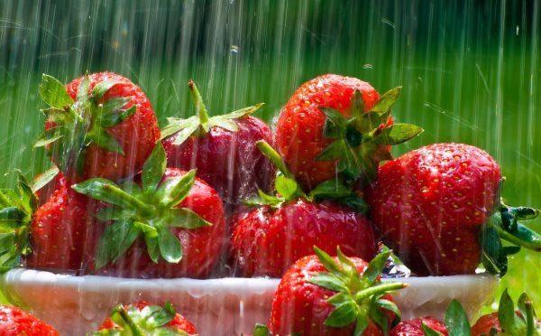 В летнее время клубнику необходимо поливать ежедневно