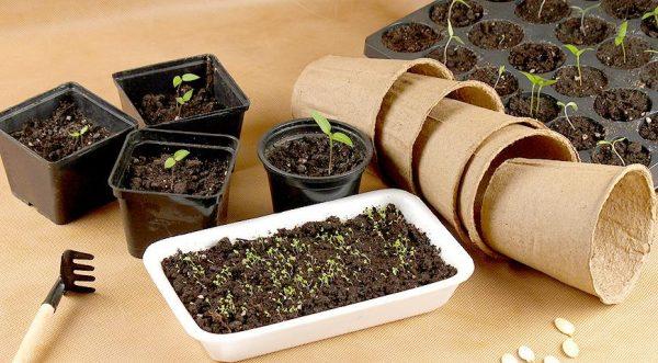 Виды контейнеров для проращивания семян