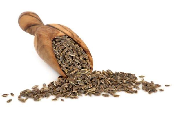 Выбор семян - важный пункт перед посадкой