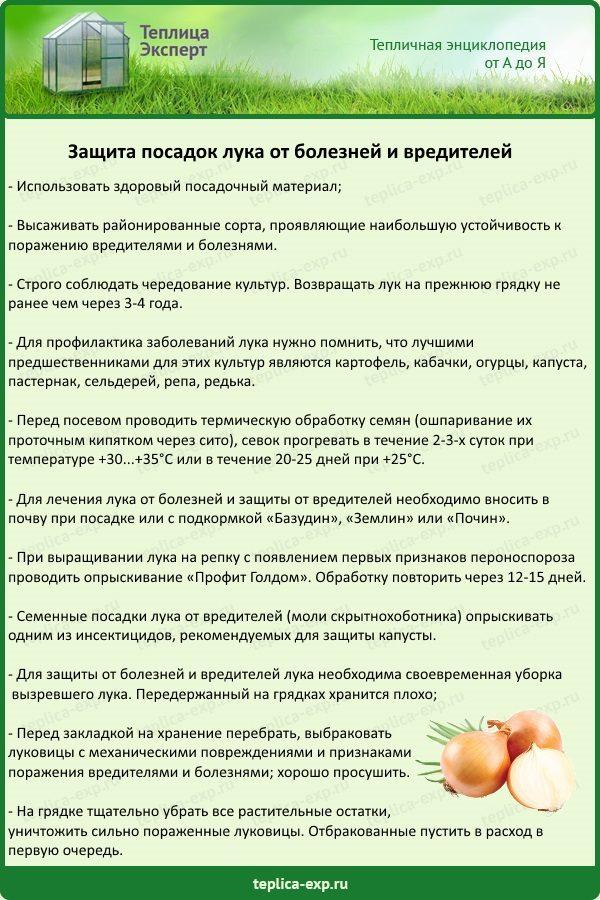 Защита посадок лука от болезней и вредителей