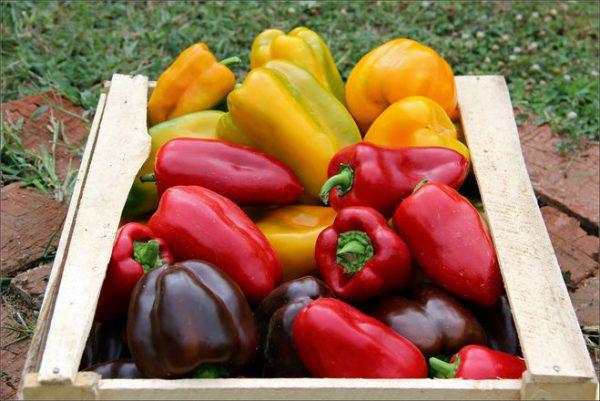 Здоровый и спелый урожай