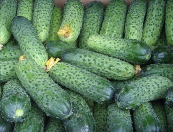 Здоровый урожай