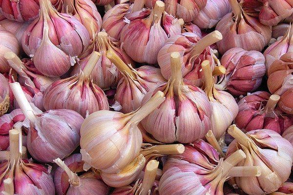 Зрелый чеснок обладает сухой чешуей, окрашенной в фиолетовый либо розоватый оттенок