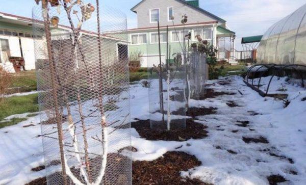 Один из лучших способов по мнению многих садоводов