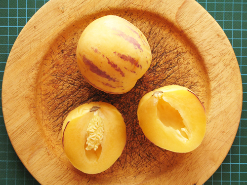 После сбора урожая, плоды пепино могут лежать в холодильнике до 60-70 дней