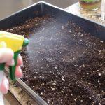 увлажнить почву из пульверизатора