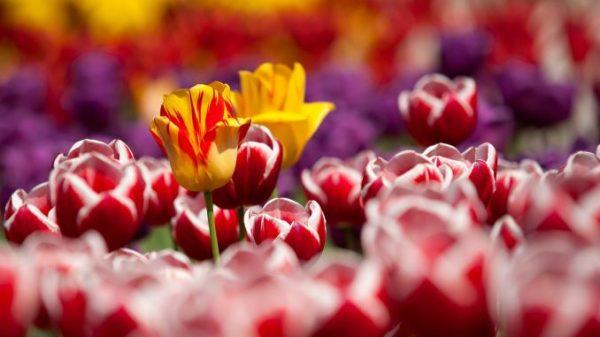 Чтобы расширить ассортимент, можно выращивать разные сорта одного и того же цветка