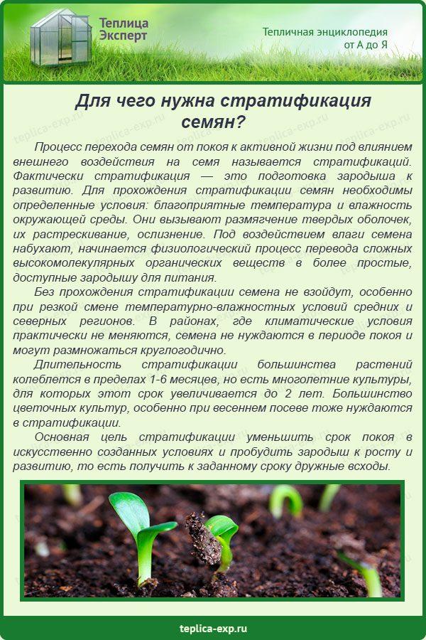 Для чего нужна стратификация семян?