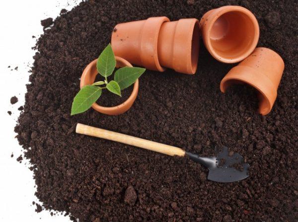 Подготовка почвы для рассады перца
