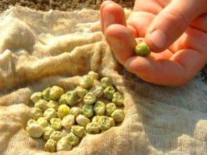 1. Отбраковать семена