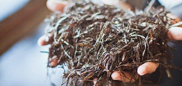 Укрывной компост для грибов готовится в основном из соломы и навоза