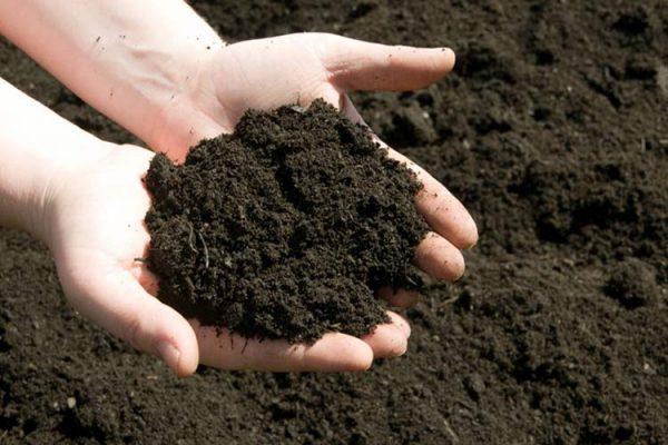 Глиняная почва не подходит для посева Геркулеса
