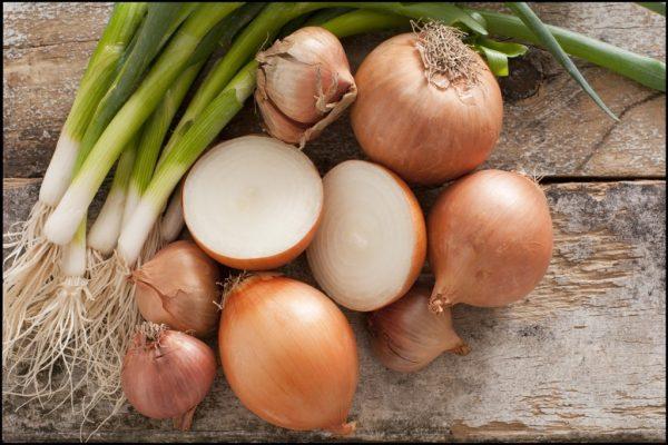 Выращивание лука – отличная идея для бизнеса