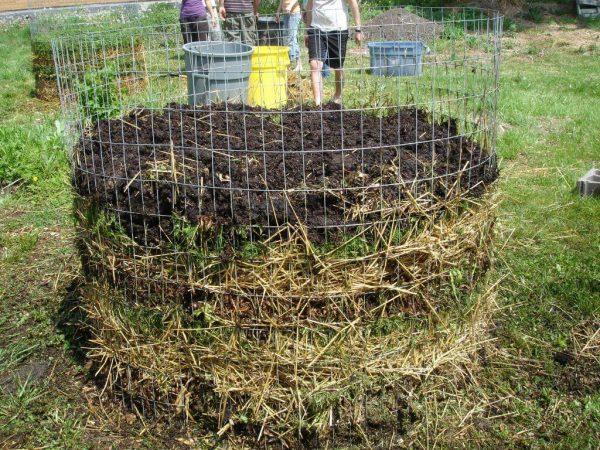 Осенью грунт следует удобрять компостом