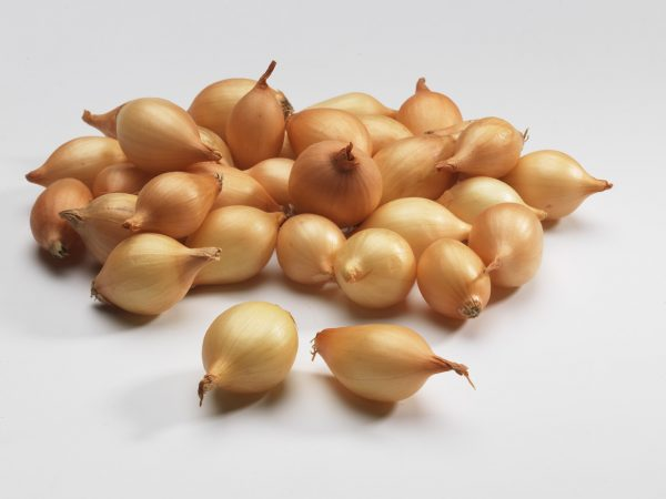 Опытные агротехники для выращивания репки рекомендуют сажать лук-севок