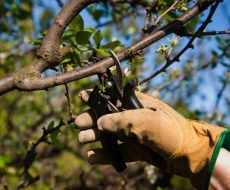 Процесс обрезки ветвей