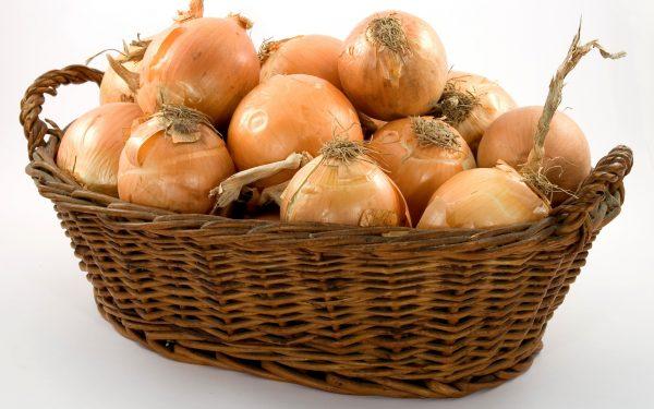 Геркулес дает аппетитные, сочные плоды