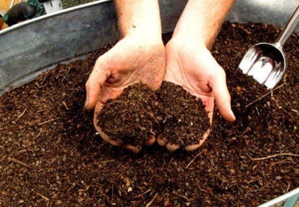 Подготовка и удобрение грядок под грибы должны проводиться еще в осеннее время