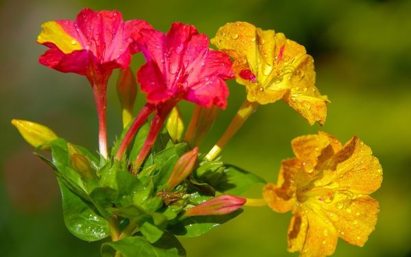 Цветок южного гостя