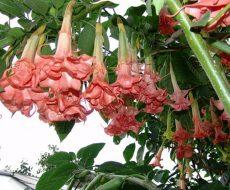 Цветы экзота неописуемо красивые и утонченные