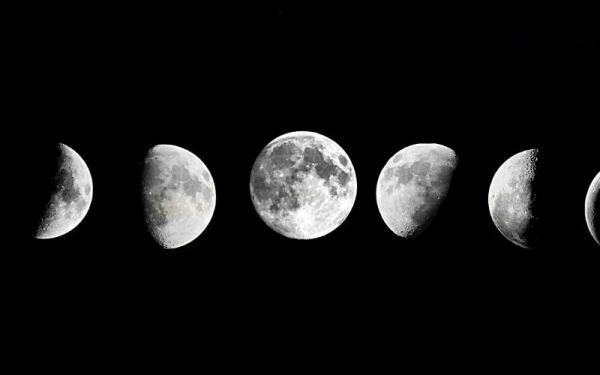 Фазы Луны влияют на внешний вид сенцев