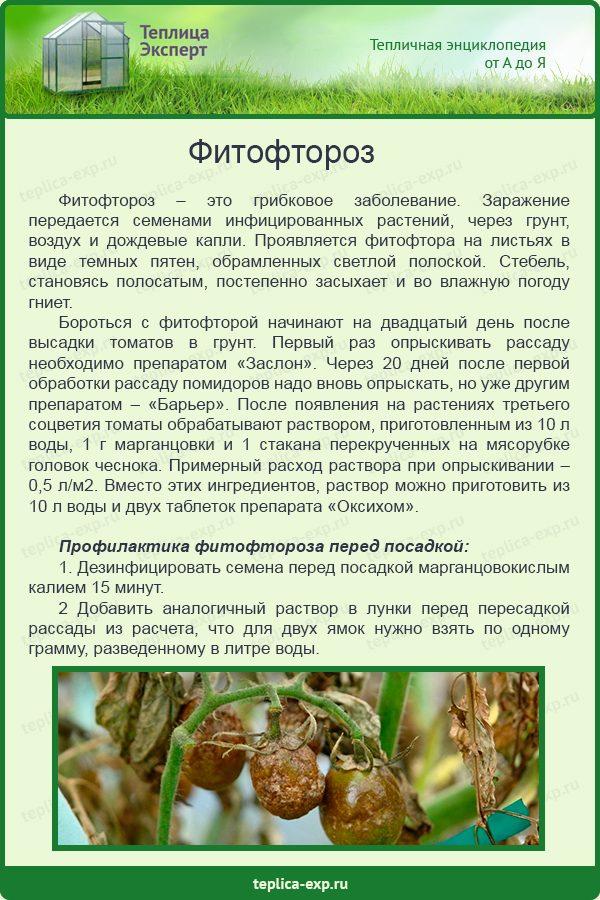 Фитофтороз