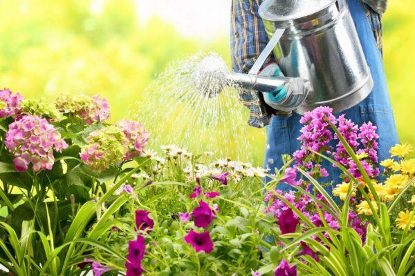 Главное в уходе за растениями - правильный полив