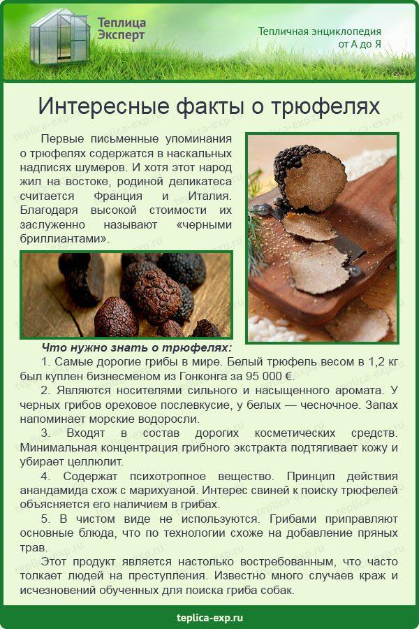 Интересные факты о трюфелях