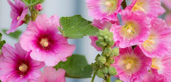 Летнее цветение
