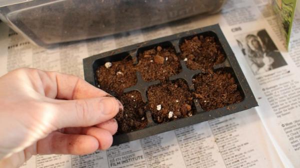 Не углубляйте семена в землю!