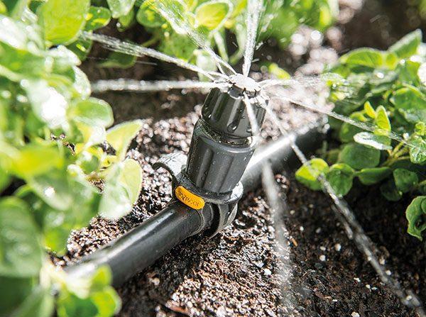 Обильнее всего поливают молодые растения