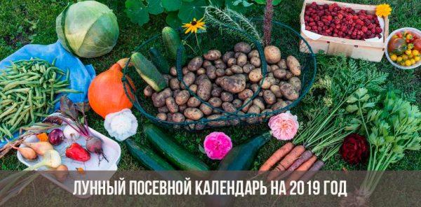 Огородникам нелишне пользоваться лунным календарем