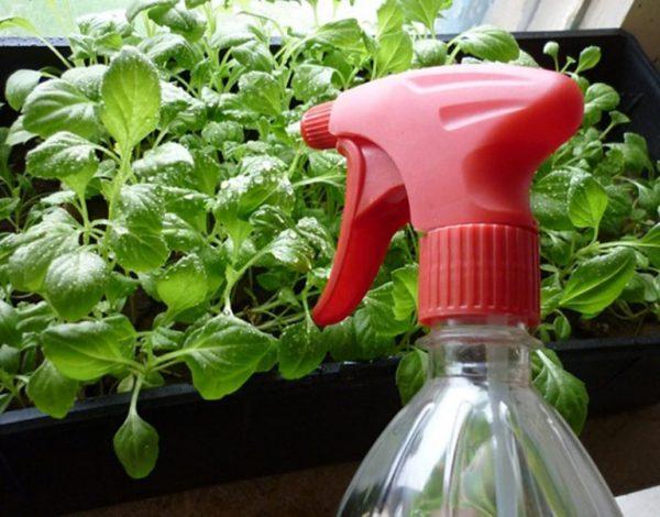 Орошение растений из пульверизатора