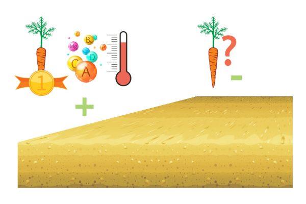 Особенности посадки в песчаной почве