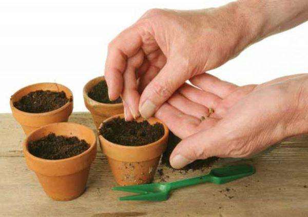 Подготовка грунта и тары для посадки семян