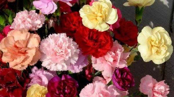 Расцветки на любой вкус