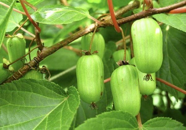 Растения нужно регулярно осматривать на предмет признаков заболеваний