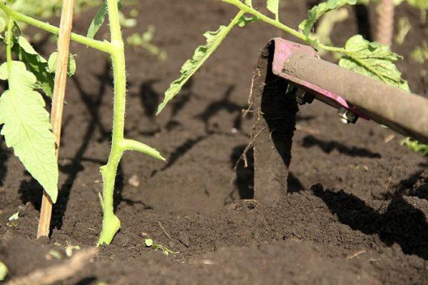 Рыхление почвы, прополку и пролив совмещают